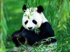 Bambuszok és díszfüvek